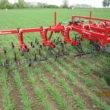Rensning af korn med radrenser