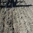 Vårbyg - 1. ukrudtstrigling efter afgrøden er kommet up. Arbejdsdybde 1,5 cm, hastighed 15 km/h