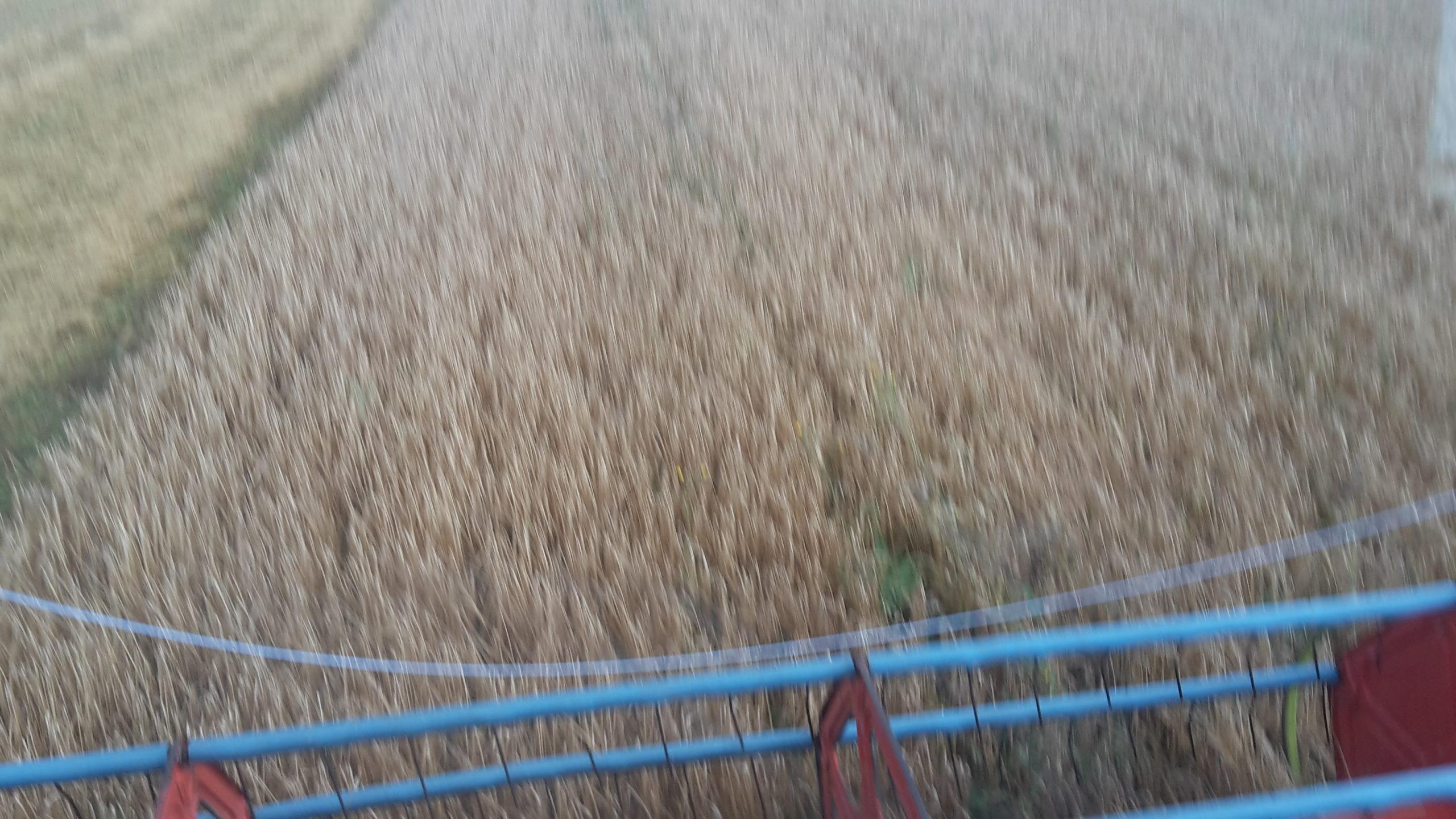 høst bilede